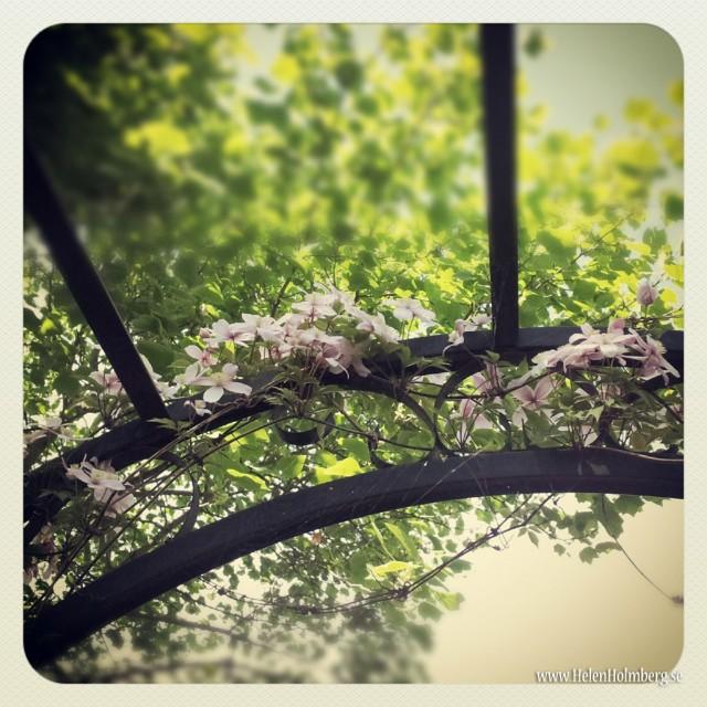 I mammas och pappas trädgård, blommor som klättrar i spalje