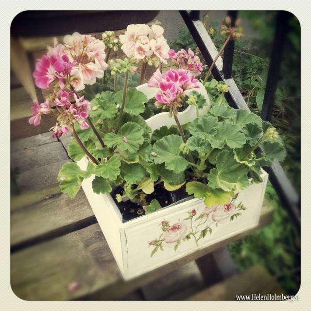 I mammas och pappas trädgård, blomsterarrangemang på trappan