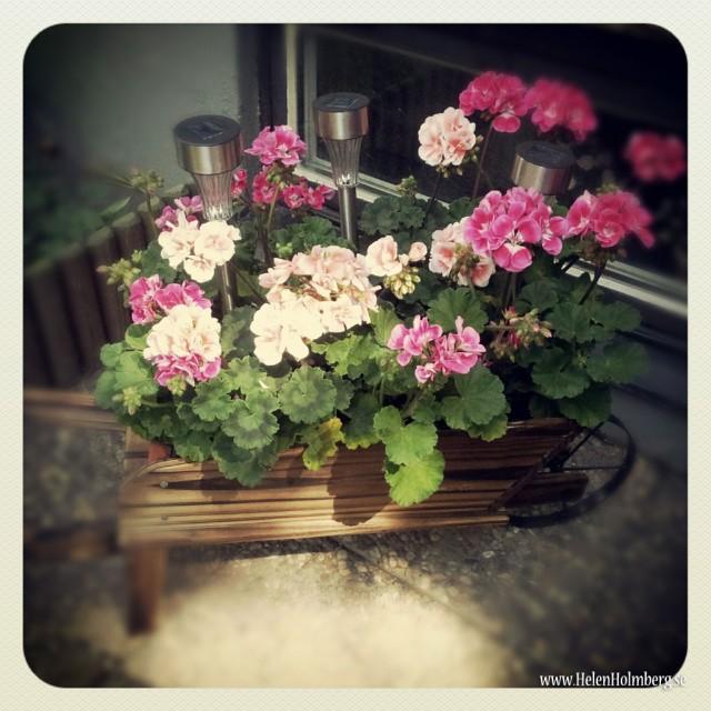 I mammas och pappas trädgård, blomsterarrangemang på framsidans uteplats