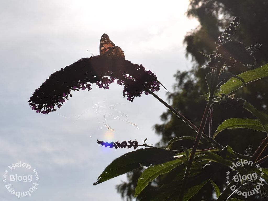 Om man ändå vore en fjäril